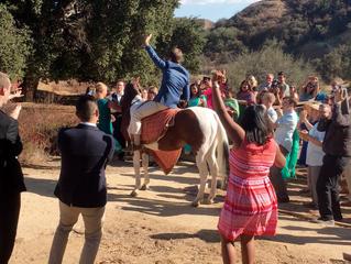 El Camino Ranch Horse in Indian Wedding
