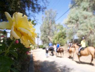 Equestrian Therapy Programs Could be Coming to ECR!