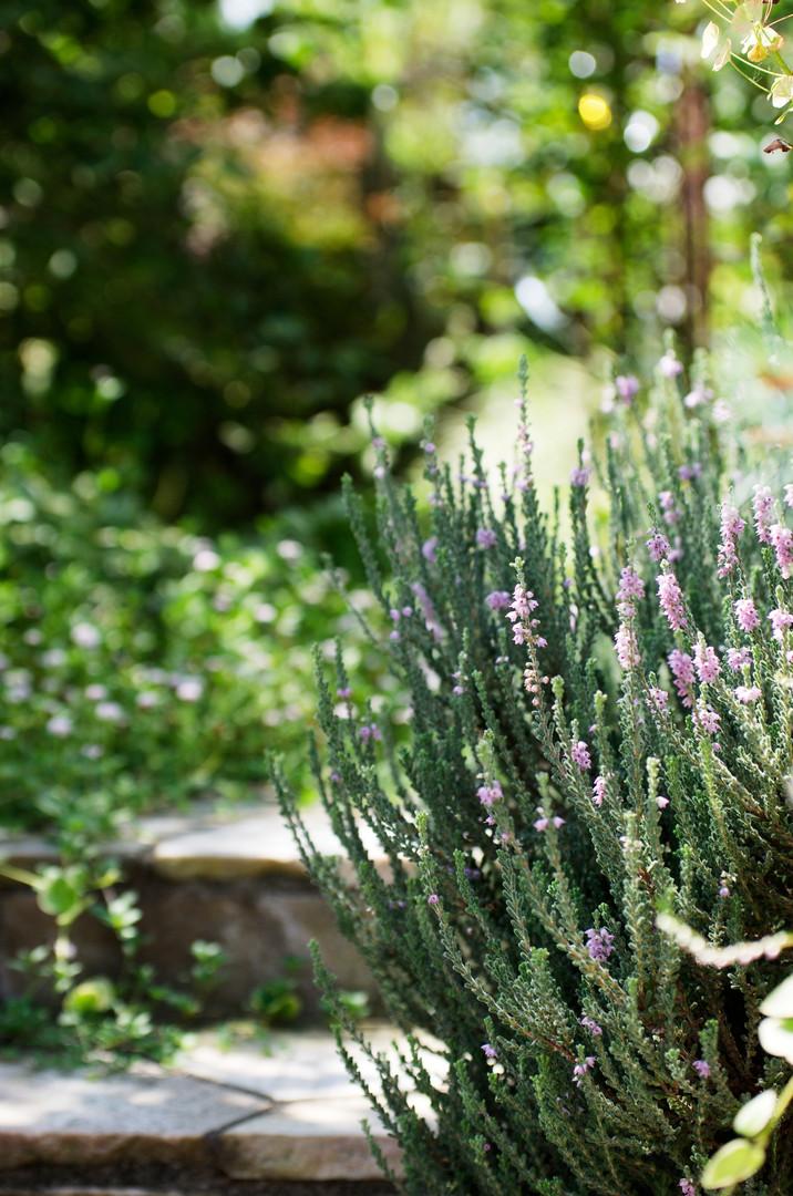 plants036.jpg