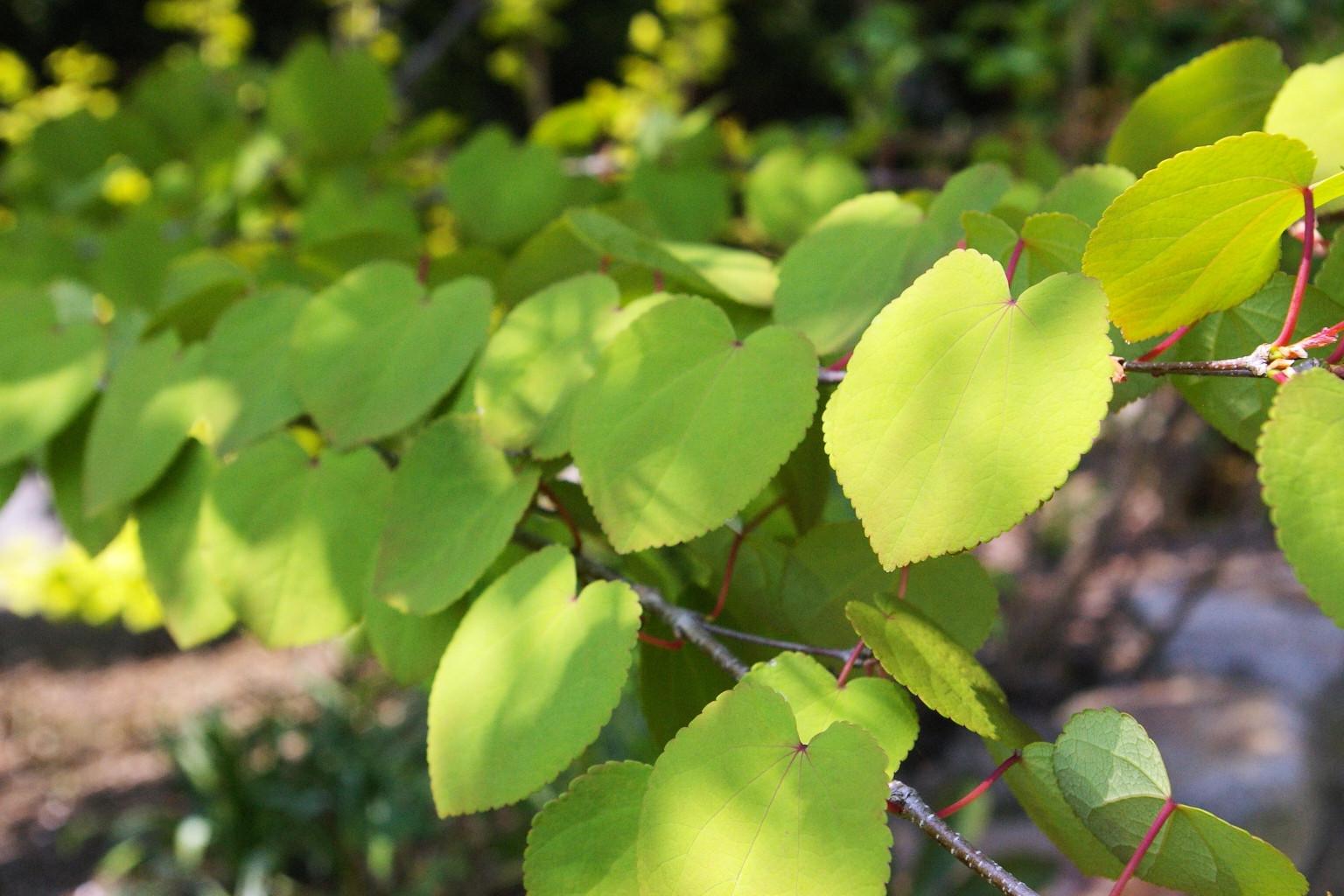 plants031.jpg