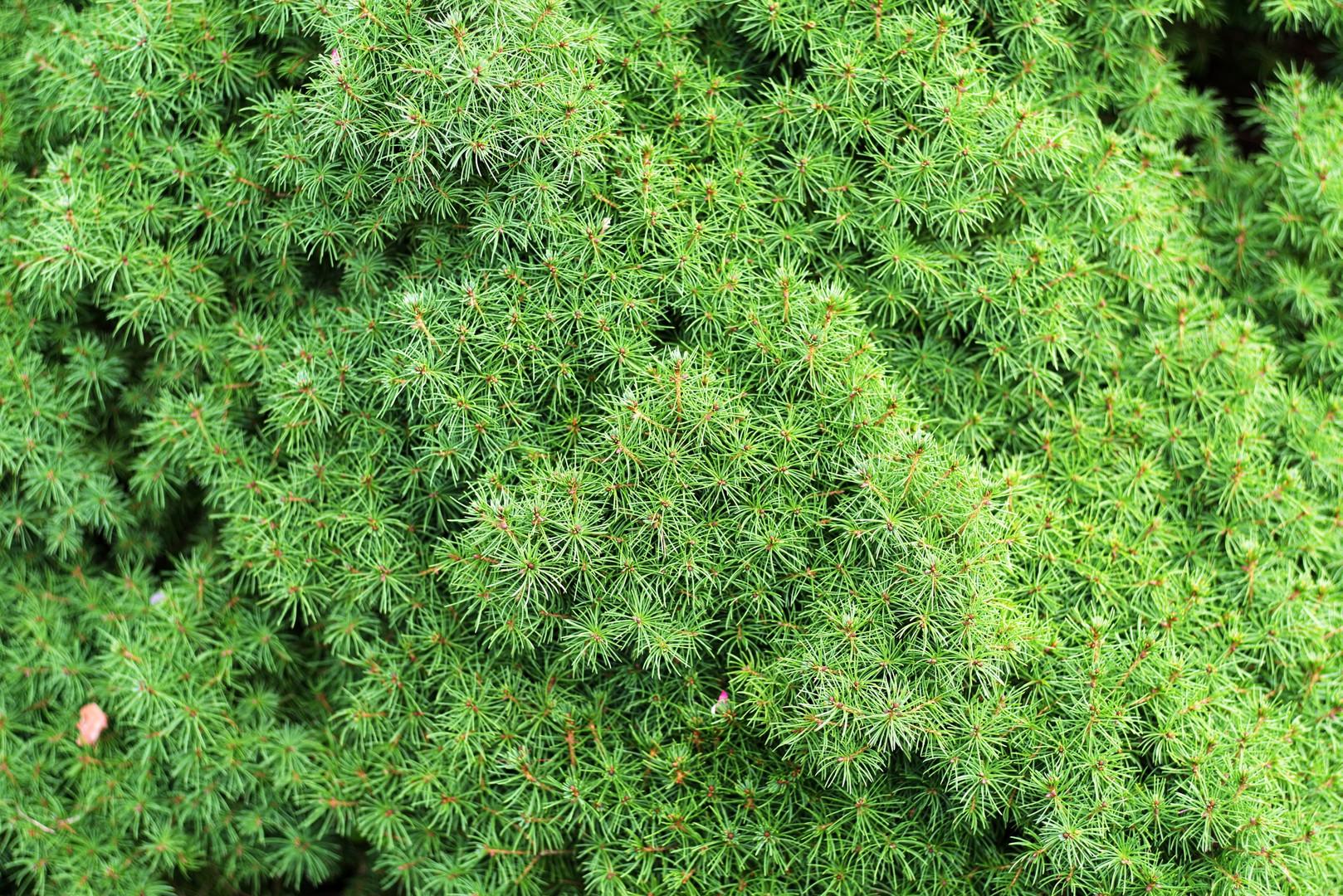 plants046.jpg