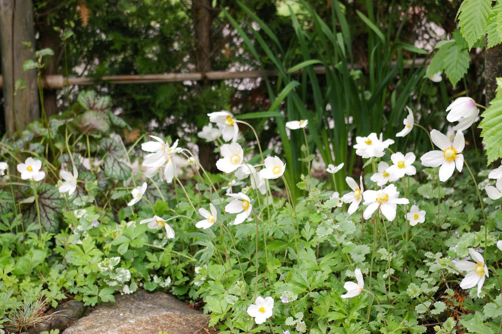 plants016.jpg