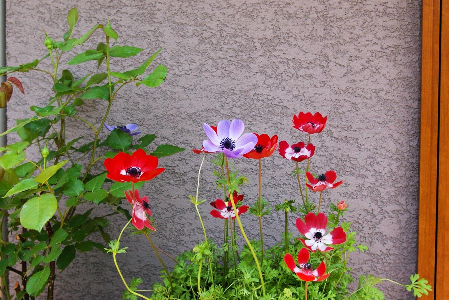 plants017.jpg