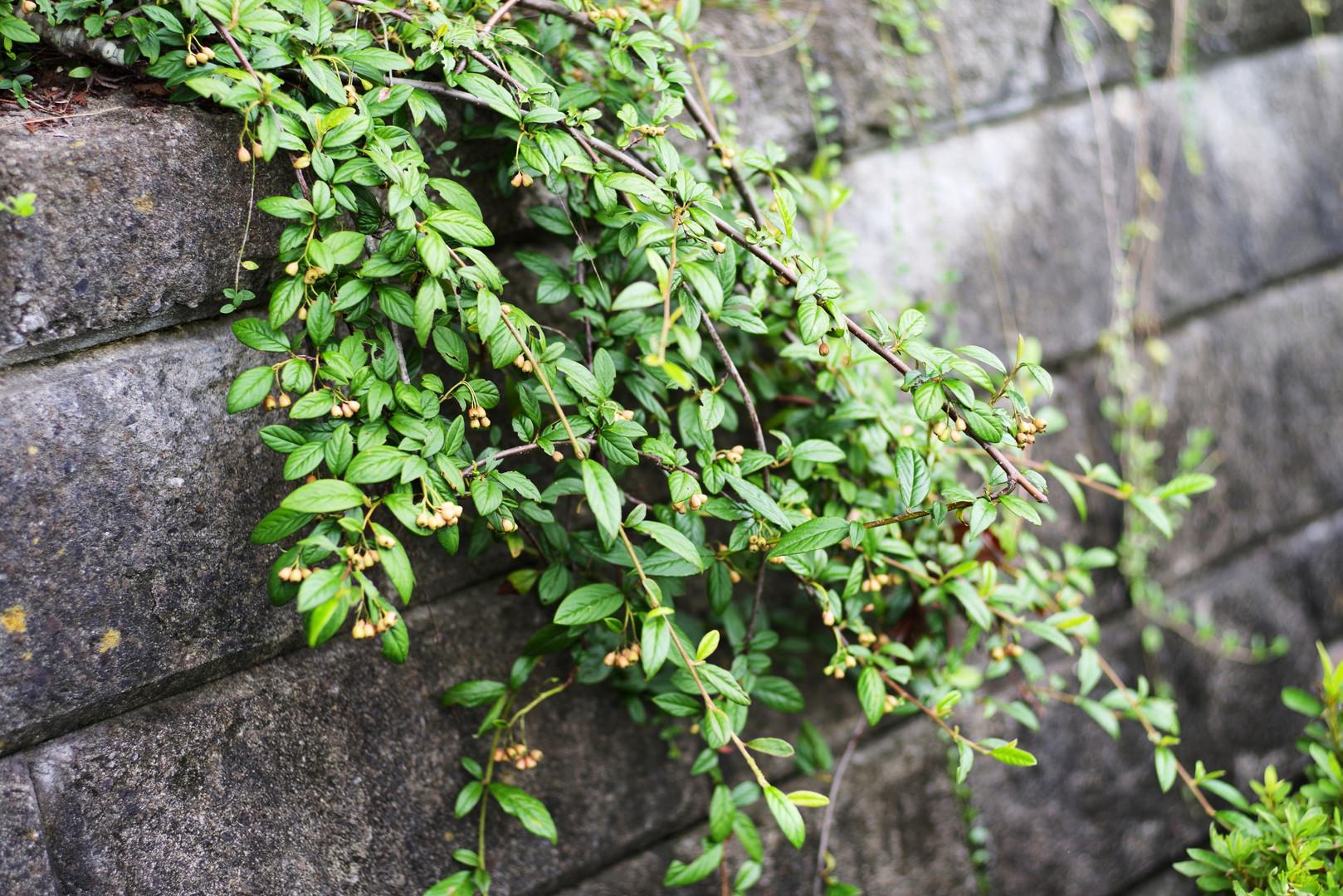 plants045.jpg