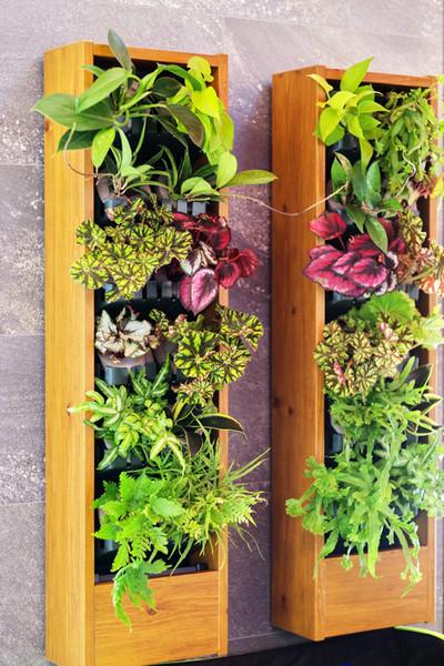 室内の壁面緑化