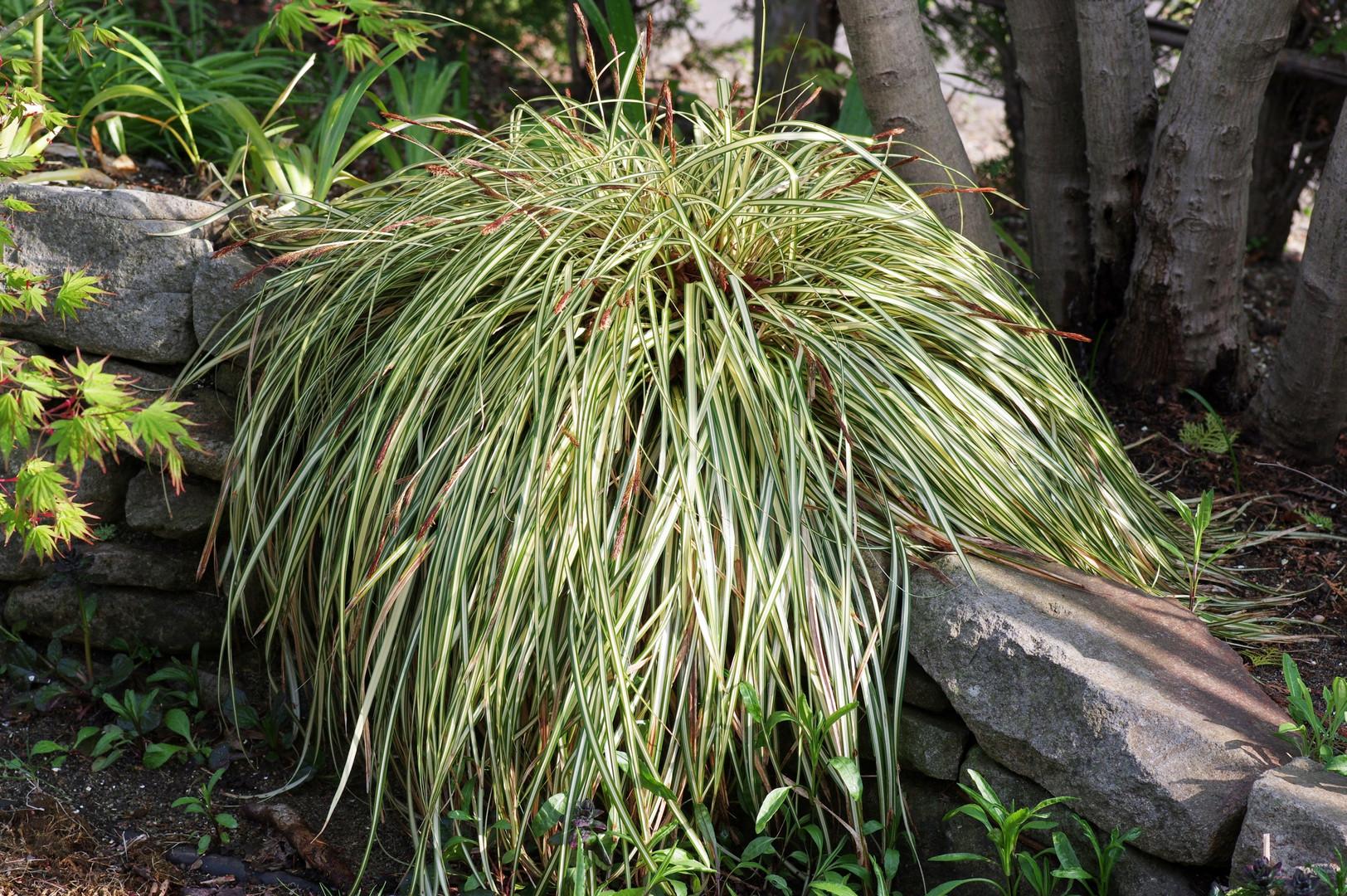 plants038.jpg