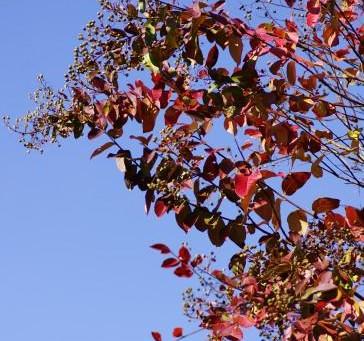 紅葉と秋のバラ