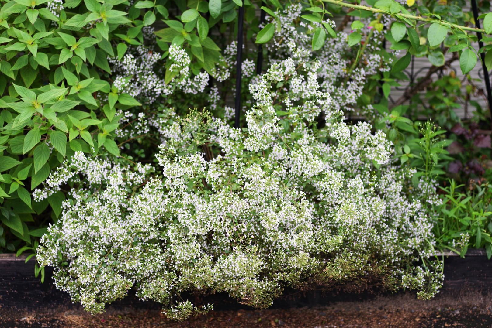 plants035.jpg