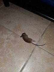 rodent control.JPG