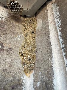 pest control in fort worth 2.JPG