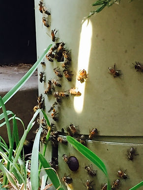 pest control fort worth.JPG