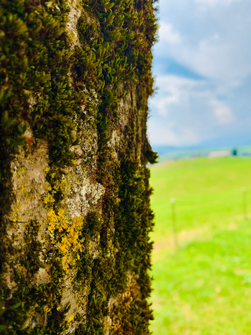 Tree Bark & Moss