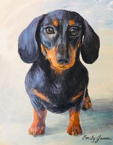 Dilly the Dachshund