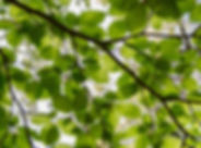 environment.jpg