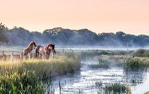 IMG_4643-bewerkt paarden Theo Hermsen.jp