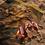 Thumbnail: Vigo Beach Towel