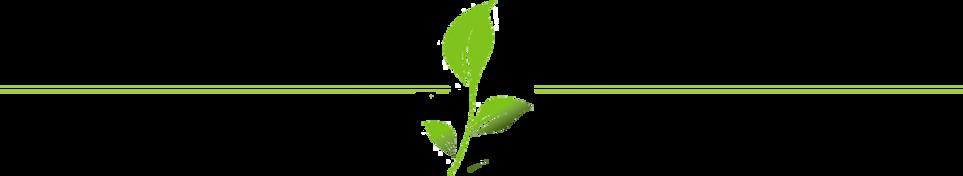leaf-divider.png