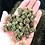 Thumbnail: Hemp Flower Smalls