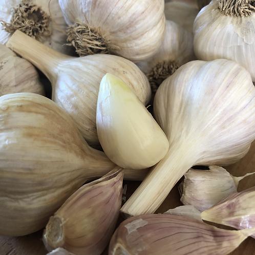 Garlic - North Star Orchard, PA