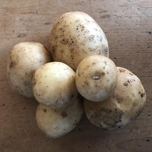Potatoes - Rodale Organic Farm