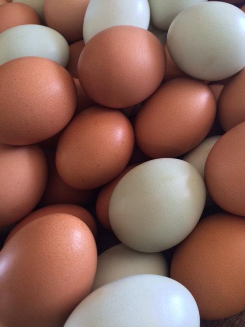 Eggs - Metzler Family Farm