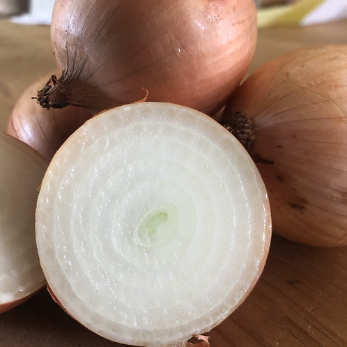 Onions, Rodale Organic Farm