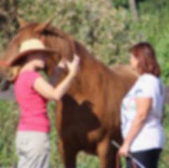 Supervision par le cheval