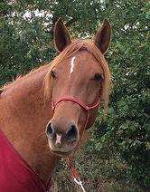 le cheval ancre vos changements