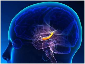 Hipocampo – envolvido na doença de Alzheimer