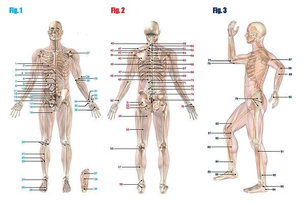 Acu Chart (1)-page-001.jpg