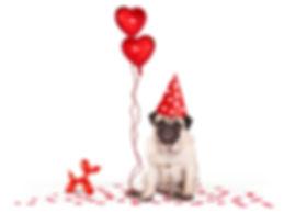 Pug homepage.new balloons.jpg