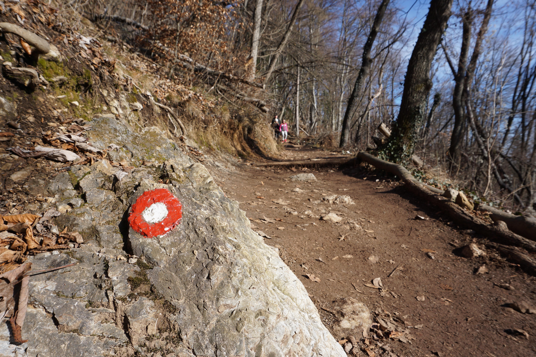 Hiking Šmarna gora ADULTS