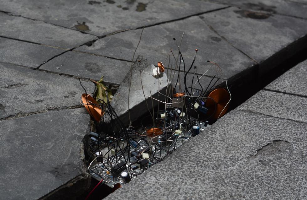 Timid Sporophyte - electronic parasites in urban habitats
