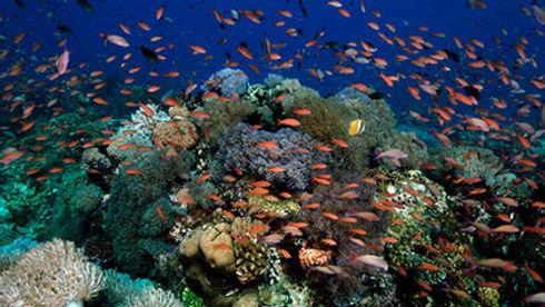viaggio-subacqueo-e-immersioni-tubbataha.jpg
