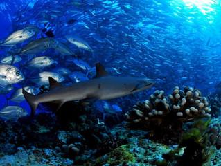 Fotografia subacquea: