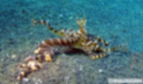 corso subacqueo