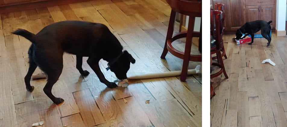 Dog using an easy DIY food puzzle of empty boxes and Rolls
