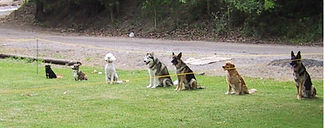 Obedience competition, group stays.