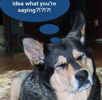 Is my dog being stubborn? disobedient? dumb?  spiteful?