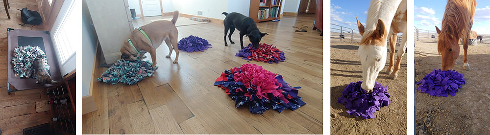 The whole family is using snuffle mats for enrichment
