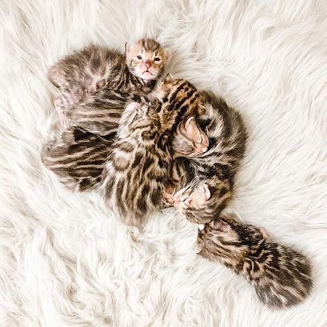Sleeping angels 😇.jpg