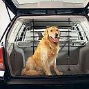 transport-chien-voiture.jpg