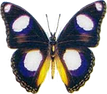 thumbnail Butterfly.png