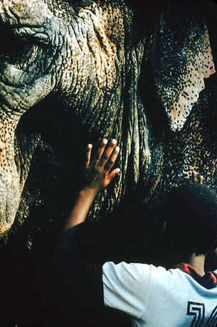 Blind child uses his hands to touch a circus elephant.