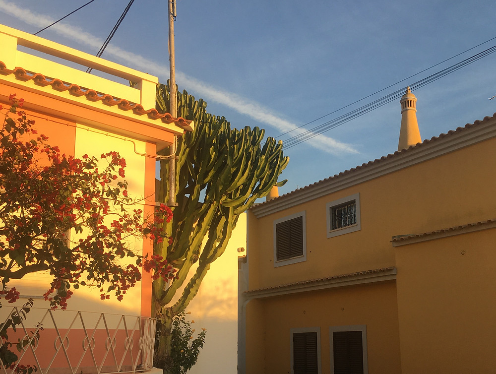 Traditional Moorish chimney in the Algarve, bougainvillea and cactus tree in the golden hour
