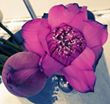 2 fleurs, l'une fermée l'autre ouverte - Shanti Massage