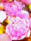 IMAG0587_1_edited_edited_edited_edited_e