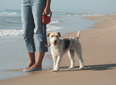 Dog Restrictions on East Riding beaches will be enforced from 4 July