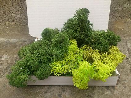 40g mix moss.jpg