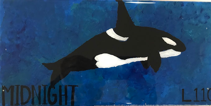 L110 Midnight born to L83 (Moonlight), her first calf, summer, 2007
